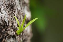 Piccola crescita degli alberi Immagine Stock