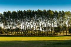 alberi piegati Immagini Stock