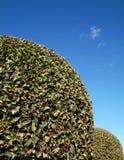 Alberi potati su cielo blu Fotografie Stock Libere da Diritti