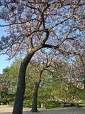 alberi principali Immagine Stock Libera da Diritti