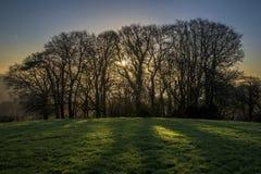 Alberi profilati ad alba nei campi, Cornovaglia, Regno Unito Fotografia Stock Libera da Diritti