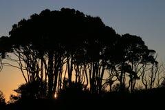 Alberi profilati sul tramonto Fotografie Stock