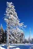 Alberi ricoperti di neve Immagine Stock