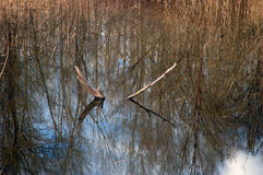 Alberi riflessi su acqua Fotografia Stock