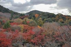 Alberi rossi al tempio di Kiyomizu, Osaka, Giappone immagine stock libera da diritti