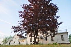 Alberi rossi, casa bianca e cielo blu immagine stock