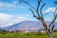 Alberi, sabbia e montagne bruciati Fotografie Stock Libere da Diritti
