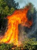 Alberi scolati su fuoco Immagine Stock