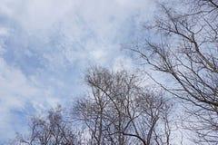 Alberi secchi su cielo blu fotografia stock libera da diritti