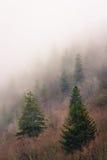 Alberi sempreverdi in aria nebbiosa del fianco di una montagna Fotografie Stock