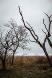 Alberi senza foglie contro un cielo nuvoloso fotografie stock libere da diritti