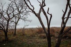 Alberi senza foglie contro un cielo nuvoloso immagine stock libera da diritti