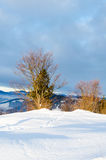 Alberi senza foglie nella parte anteriore della neve Vista delle montagne di inverno Immagine Stock