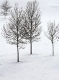 Alberi sfrondati di inverno in neve Fotografia Stock