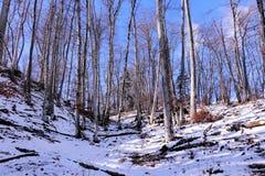 Alberi soleggiati nell'orario invernale Fotografia Stock