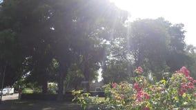 Alberi soleggiati in parco immagine stock