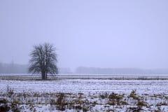 Alberi soli nella neve immagini stock