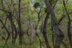 Alberi sommersi inondazione della primavera fotografia stock