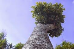 Alberi sopra il bello cielo Fotografie Stock Libere da Diritti