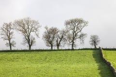 Alberi sopra il campo di erba, Scozia Fotografie Stock Libere da Diritti