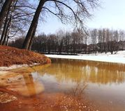 Alberi sopra il fiume della molla Inondazione della primavera Immagine Stock Libera da Diritti