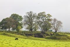 Alberi sopra il prato di thr, Scozia Fotografie Stock Libere da Diritti