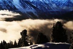 Alberi sopra le nubi Fotografie Stock Libere da Diritti
