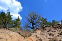 Alberi sopra un'alta scogliera sabbiosa Fotografie Stock