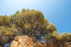 Alberi sopra una montagna, su un pendio dell'alberi superiori fotografie stock libere da diritti
