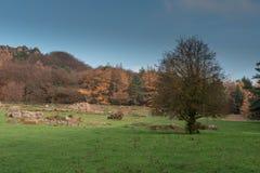 Alberi sotto Hen Cloud contro un bello cielo blu ai triotti nel parco nazionale di punta del distretto fotografia stock