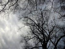 Alberi spettrali e cieli tempestosi Fotografia Stock Libera da Diritti