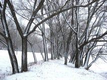 Alberi spruzzati con neve fotografia stock