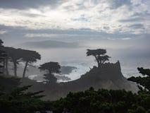Alberi stagionati di Monterey Cypress alla costa fotografia stock libera da diritti