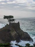 Alberi stagionati di Monterey Cypress alla costa immagine stock