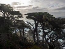 Alberi stagionati di Monterey Cypress alla costa fotografia stock