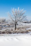 Alberi su campo di neve Fotografia Stock