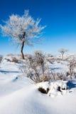 Alberi su campo di neve Fotografie Stock Libere da Diritti