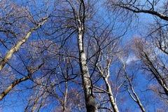 Alberi su cielo blu immagini stock