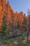 Alberi su Queen& x27; traccia del giardino di s, Bryce Canyon Utah fotografia stock libera da diritti