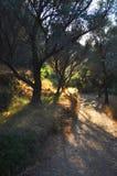 Alberi su Samos immagine stock