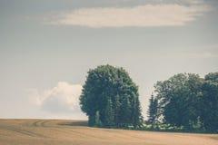 Alberi su un campo rurale Fotografia Stock