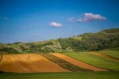 Alberi su un campo verde Immagine Stock