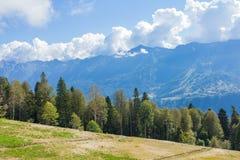 Alberi su un fondo delle montagne Fotografia Stock