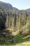 Alberi su un percorso accanto ad un lago Fotografia Stock Libera da Diritti