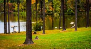 Alberi su una collina sopra il lago Williams, vicino a York, la Pensilvania Fotografie Stock
