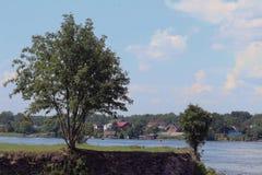 Alberi su una scogliera sulla sponda del fiume Fotografie Stock