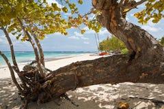 Alberi su una spiaggia fotografia stock libera da diritti