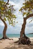 Alberi su una spiaggia fotografia stock