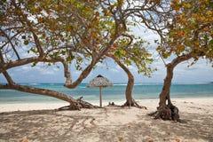 Alberi su una spiaggia immagini stock libere da diritti