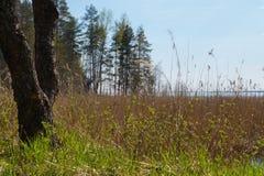 Alberi sui precedenti della riva del lago Immagine Stock